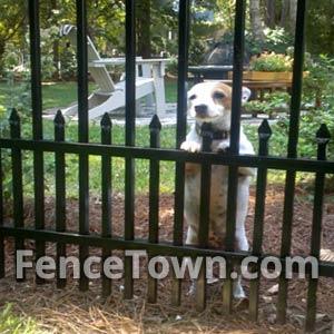 Specrail Aluminum Pet Fence